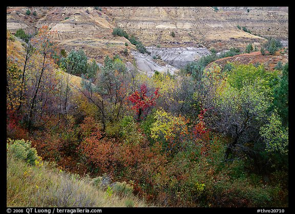 Fall foliage and badlands, North Unit. Theodore Roosevelt  National Park (color)