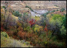 Fall foliage and badlands, North Unit. Theodore Roosevelt National Park, North Dakota, USA.