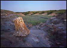 Petrified log stump at dusk, South Unit. Theodore Roosevelt National Park, North Dakota, USA.
