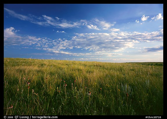 Tall grass prairie and wildflowers, South Unit, late afternoon. Theodore Roosevelt National Park (color)
