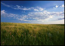 Tall grass prairie and wildflowers, South Unit, late afternoon. Theodore Roosevelt National Park, North Dakota, USA.