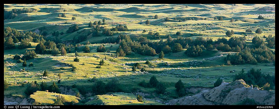 Landscape of prairie, badlands, and trees. Theodore Roosevelt National Park (color)