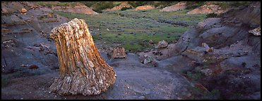 Petrified stump. Theodore Roosevelt National Park (Panoramic color)