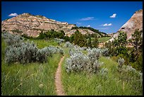 Caprock coulee trail. Theodore Roosevelt National Park, North Dakota, USA. (color)