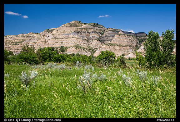 Summer prairie and badlands. Theodore Roosevelt National Park (color)