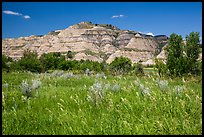 Summer prairie and badlands. Theodore Roosevelt National Park, North Dakota, USA. (color)