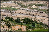 Badlands strata. Theodore Roosevelt National Park ( color)