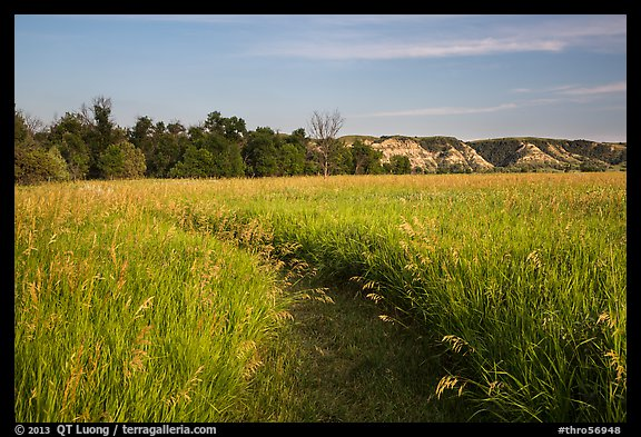 Overgrown trail in late afternoon, Elkhorn Ranch Unit. Theodore Roosevelt National Park (color)