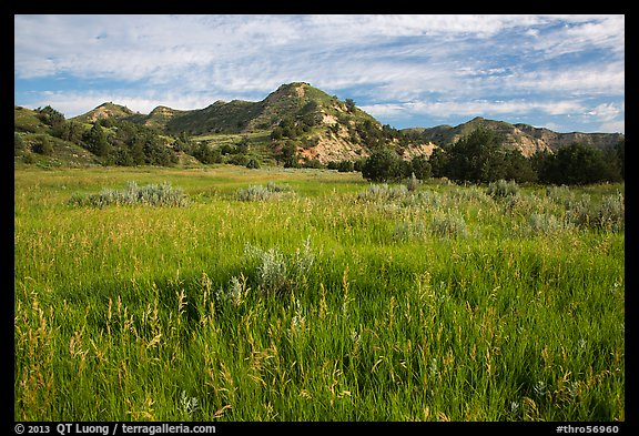 Meadow and badlands, early morning, Elkhorn Ranch Unit. Theodore Roosevelt National Park (color)