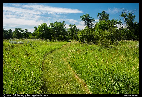 Trail overgrown with grasses, Elkhorn Ranch Unit. Theodore Roosevelt National Park (color)