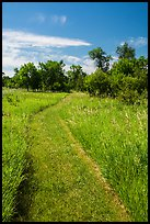 Soft grass-covered trail, Elkhorn Ranch Unit. Theodore Roosevelt National Park, North Dakota, USA. (color)