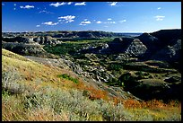 Forested Badlands. Theodore Roosevelt National Park, North Dakota, USA.