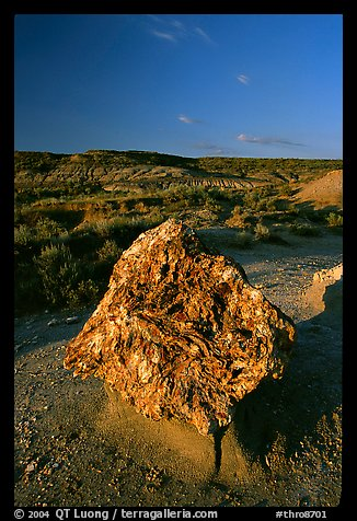 Colorful Petrified stump. Theodore Roosevelt National Park (color)