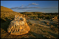 Big Petrified stump and badlands, late afternoon. Theodore Roosevelt National Park, North Dakota, USA.