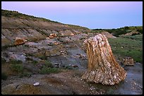 Big petrified sequoia stumps, dusk. Theodore Roosevelt National Park, North Dakota, USA. (color)