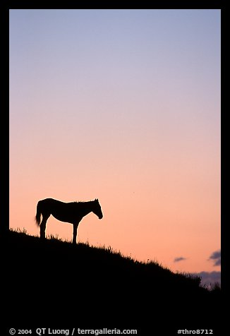 Wild horse silhouetted at sunset, South Unit. Theodore Roosevelt National Park, North Dakota, USA.