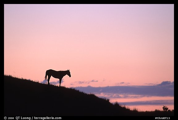 horse wallpaper wild. Wild horse silhouetted at sunset, South Unit.