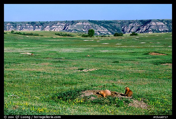 Prairie Dog town, South Unit. Theodore Roosevelt National Park (color)