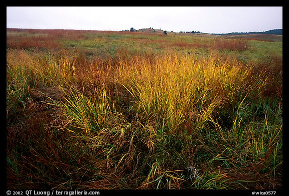 Tall grass prairie in fall. Wind Cave National Park (color)