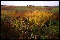 Tall grass prairie in fall. Wind Cave National Park, South Dakota, USA.