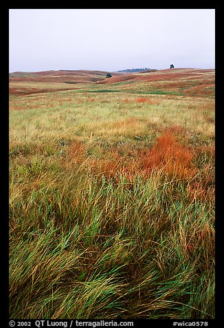 Tall grass prairie. Wind Cave National Park (color)