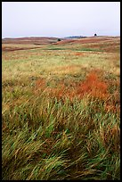 Tall grass prairie. Wind Cave National Park, South Dakota, USA.