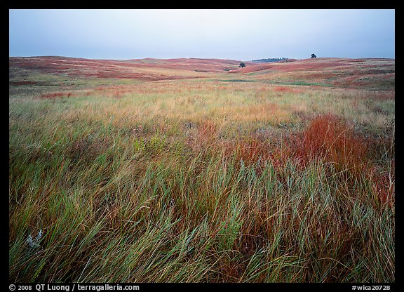 Prairie of tall grasses with subtle autumn color. Wind Cave National Park (color)