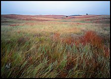 Prairie of tall grasses with subtle autumn color. Wind Cave National Park, South Dakota, USA.