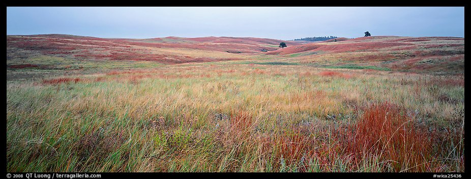 Prairie grasses on cloudy autumn morning. Wind Cave National Park (color)