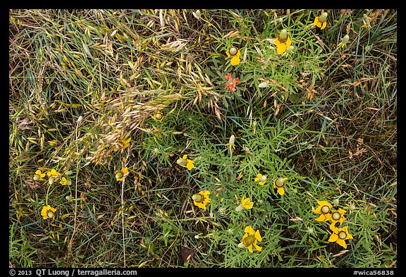 Ground close-up of prairie with flowers and grasses. Wind Cave National Park (color)