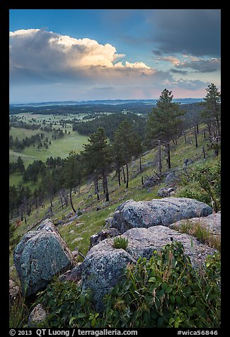 Rankin Ridge and cumulonimbus cloud in late afternoon. Wind Cave National Park (color)