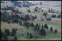 Rolling hills with ponderosa pines and grasslands. Wind Cave National Park, South Dakota, USA. (color)