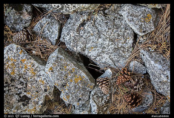 Limestone rock and ponderosa pine cones. Wind Cave National Park (color)