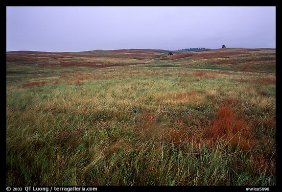 Tallgrass prairie. Wind Cave National Park (color)