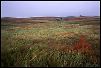Tallgrass prairie. Wind Cave National Park, South Dakota, USA.