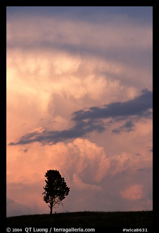 Lone tree and storm cloud, sunset. Wind Cave National Park
