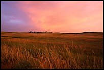 Tall grasses and pink cloud, sunrise. Wind Cave National Park, South Dakota, USA.