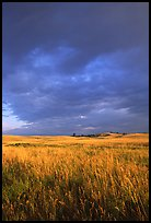 Prairie with tall grasses and dark sky, early morning. Wind Cave National Park, South Dakota, USA. (color)