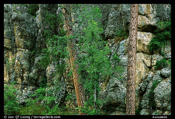 Limestone cliff. Wind Cave National Park, South Dakota, USA.