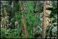 Limestone cliff. Wind Cave National Park ( color)
