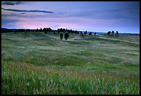 Rolling hills covered with grasses and scattered pines, dusk. Wind Cave National Park ( color)