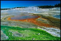 Green and red algaes in Norris geyser basin. Yellowstone National Park, Wyoming, USA.