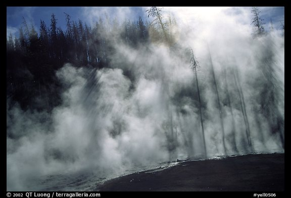Trees shadowed in thermal steam, Upper geyser basin. Yellowstone National Park, Wyoming, USA.