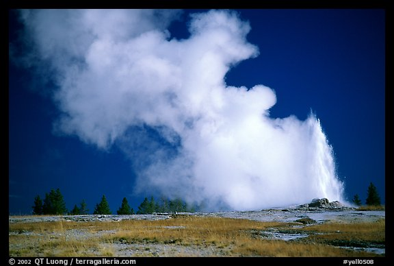 Steam clouds drifting from Old Faithfull geyser. Yellowstone National Park, Wyoming, USA.