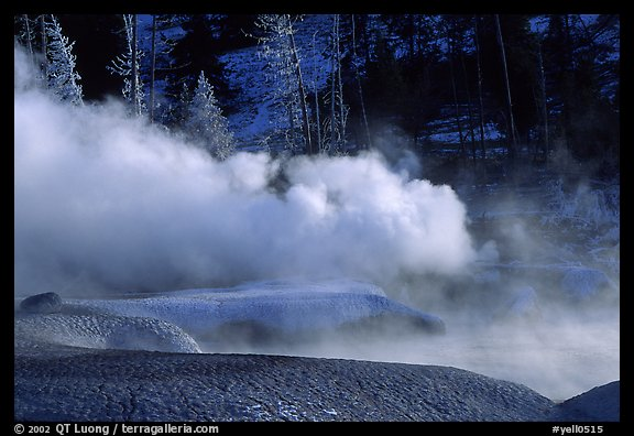 Thermal steam and frosted trees. Yellowstone National Park (color)