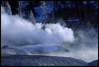 Thermal steam and frosted trees. Yellowstone National Park, Wyoming, USA. (color)