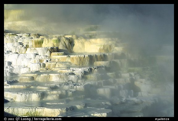 Picture minerva travertine terraces at mammoth hot for Minerva terrace yellowstone