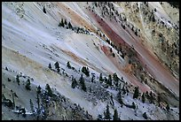 Trees and colorful mineral deposits, Grand Canyon of Yellowstone. Yellowstone National Park, Wyoming, USA. (color)