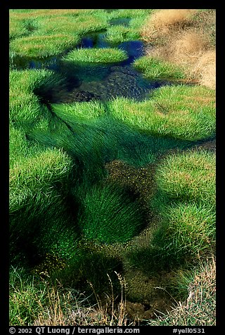 Grasses and stream. Yellowstone National Park, Wyoming, USA.