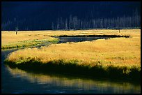 Yellowstone River and meadow in fall. Yellowstone National Park, Wyoming, USA.